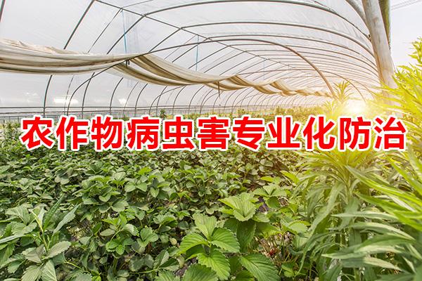 农作物病虫害专业化防治服务管理办法